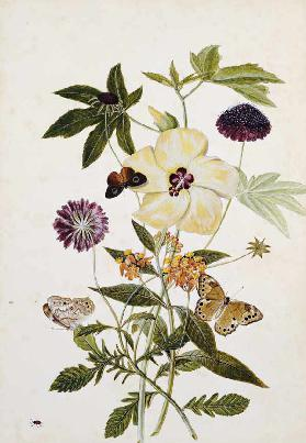 Milkweed,  Poppy And Hibiscus  With Butterflies And A Beetle
