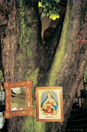 Branch between tree trunks lit up Mother Mary adding (photo)