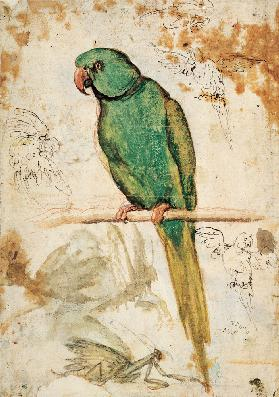 Green parrot and sketches of parrots and praying mantis