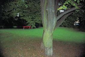 Red bench and tree bark (photo)