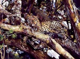Kenyan Leopard, 1997 (acrylic and pencil crayon on paper)