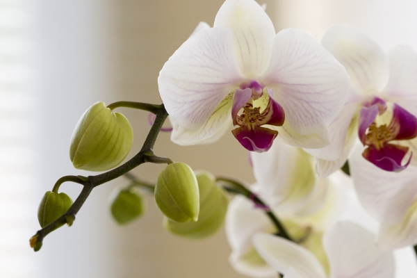 orchidee artist artist. Black Bedroom Furniture Sets. Home Design Ideas