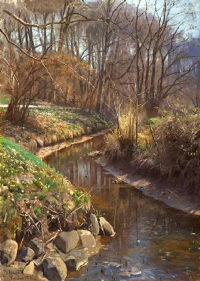 Spring at the Forest Stream