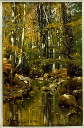 Forest Stream in Late Summer