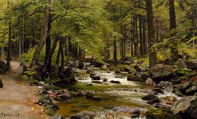 Forest Stream in Spring