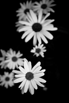 Flowers in black&white