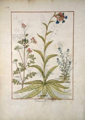 Ms Fr. Fv VI #1 fol.138v Lungwort and Geranium