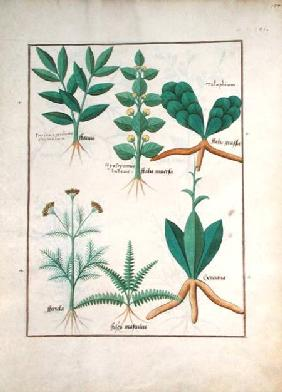 Ms Fr. Fv VI #1 fol.157r Ferns and Shrubs
