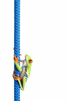 red eyed tree frog on rope isolated