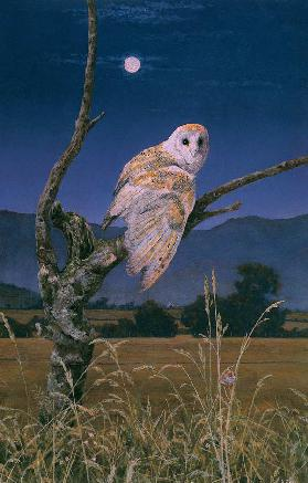 Barn Owl (oil on canvas)