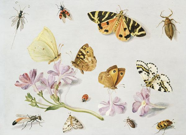 Butterflies, moths and other insects with a sprig of periwinkle