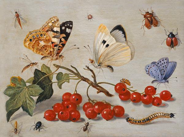 A still life with sprig of Redcurrants, butterflies, beetles, caterpillar and insects (oil on copper