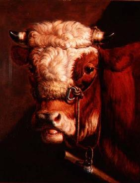 Portrait of a Bull's Head