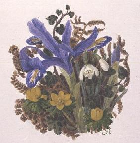 Iris Histriodes, Aconite and Snowdrop (w/c on paper)