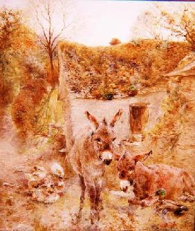 Donkeys and Ducks in a Farmyard