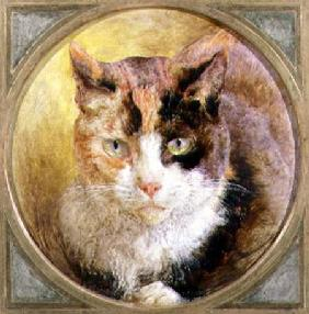 A Head Study of a Tortoiseshell Cat